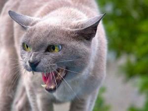 Hat auch Angst vor Spatzen - freilaufende Hauskatze