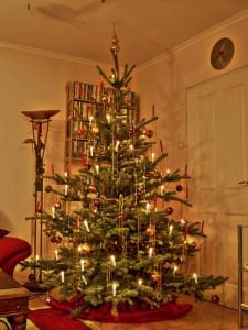 Der eindeutige Beweis - Der magische Baum leuchtet sogar nur mithilfe elektrischen Stroms!